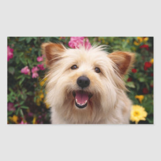 Happy Cairn Terrier Puppy Dog in Garden Sticker