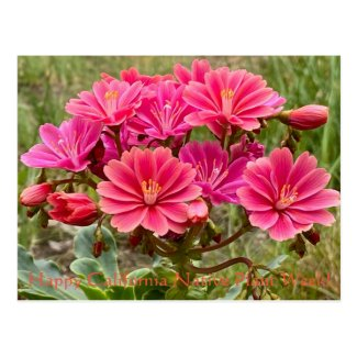 Happy California Native Plant Week! Postcard