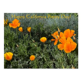 Happy California Poppy Day! Postcard