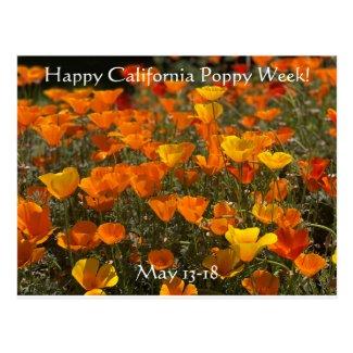 Happy California Poppy Week! Postcard
