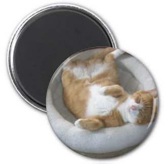 Happy Cat 2 Inch Round Magnet