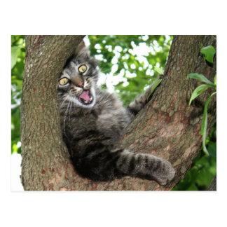 Happy cat in tree postcard