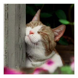 sureflap cat door manual
