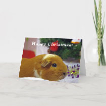 Happy Christmas guinea pig card