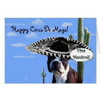 Happy cinco de Mayo boston terrier greeting card
