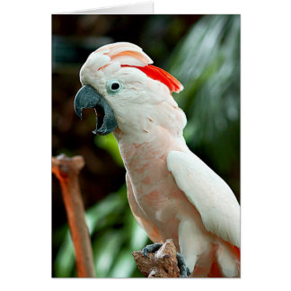 Happy cockatoo greeting card