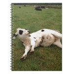 happy cow organic farm note books