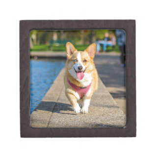 Happy Cute Blue and Brown eyed corgi panting Jewelry Box