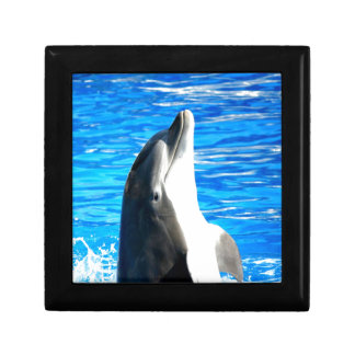 Happy dance bottlenose dolphin trinket boxes