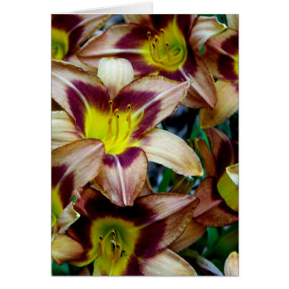 Happy Daylilies