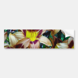 Happy Daylilies Bumper Sticker