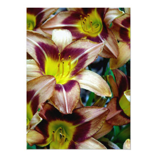 Happy Daylilies Announcement