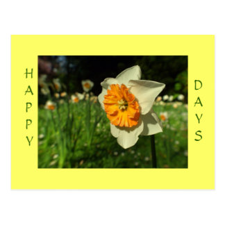 Happy days - sunshiny flower card