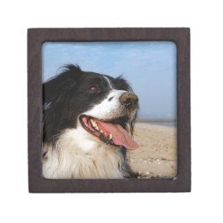 Happy dog at the beach jewelry box