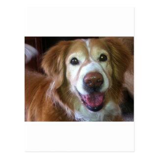 Happy Dog Days Postcards