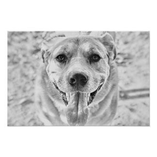 Happy Dog face poster print