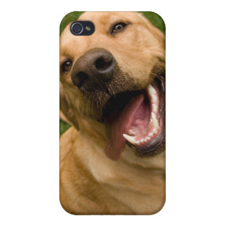 Happy Dog Golden Lab Retriever i Cases For iPhone 4