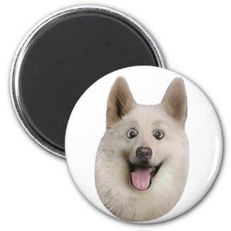Happy_Dog_Mult_Products Imán Redondo 5 Cm