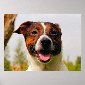 Happy dog portrait poster