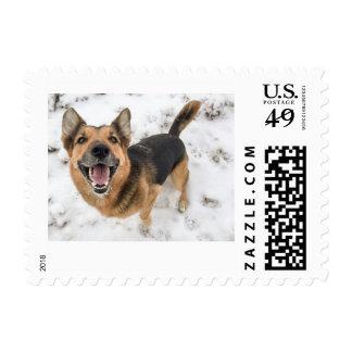 Happy Dog Postage Stamp