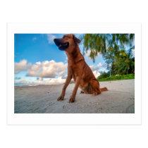 Happy dog postcard