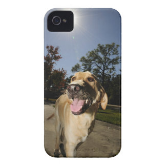 Happy dog running around exercising outdoors in Case-Mate iPhone 4 case