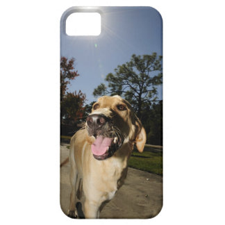 Happy dog running around exercising outdoors in iPhone SE/5/5s case