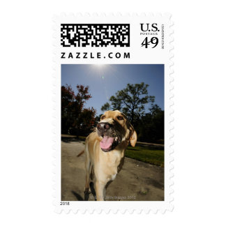 Happy dog running around exercising outdoors in postage