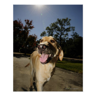 Happy dog running around exercising outdoors in poster
