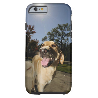 Happy dog running around exercising outdoors in tough iPhone 6 case
