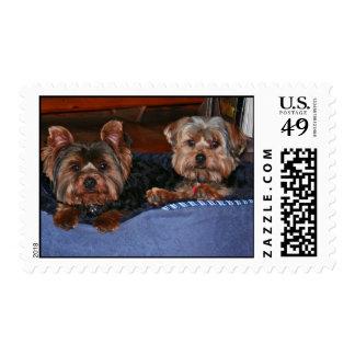 Happy dogs postage