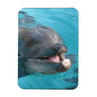 Happy Dolphin Vinyl Magnets