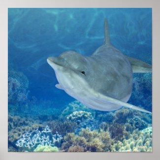 happy dolphin print