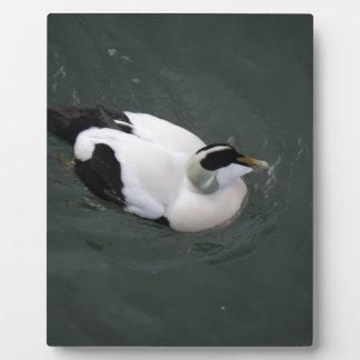 Happy Duck Photo Plaques