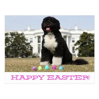 Happy Easter - Bo Obama  Postcard