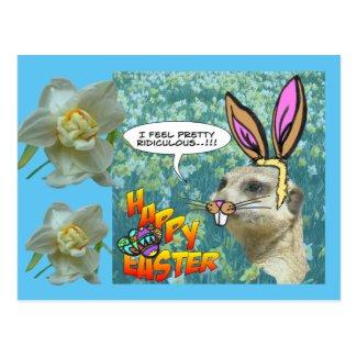 Happy Easter Meerkat Daffodils Postcard