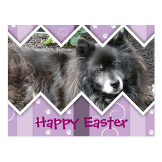 Happy Easter Photo-Paw Prints Post Card
