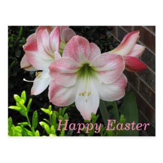 Happy Easter Pink Lily Postcard