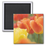 Happy Easter Tulips 2 Inch Square Magnet