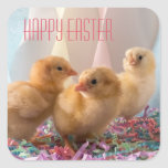 Happy Easter with Three Yellow Baby Chicks Square Sticker