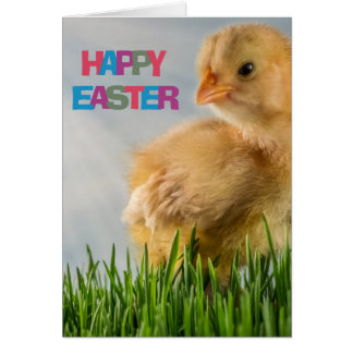 Happy Easter Yellow Baby Chick in Grass Card