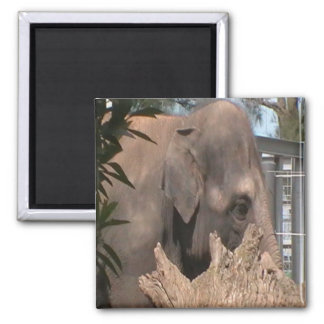 Happy Elephant Magnet