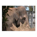Happy Elephant Postcard