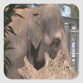 Happy Elephant Square Sticker
