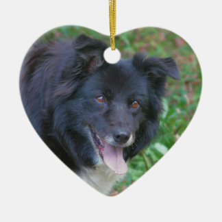 Happy Face Border Collie Dog Ornament