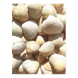 Happy Father´s Day, Seashells, Photo Summer Beach Postcard
