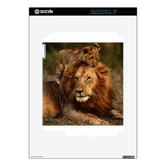 Happy Fathers Day Daddy Lion and Lion Cub iPad 2 Skins
