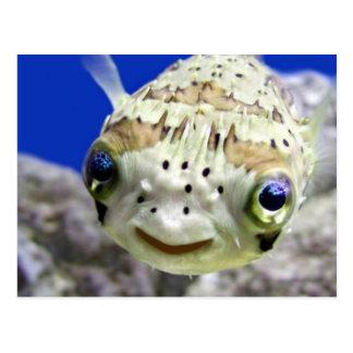 Happy Fish Postcards