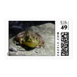 Happy Frog ~ Postage Stamps