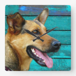 Happy German Shepherd Dog Rustic Teal Square Wall Clock